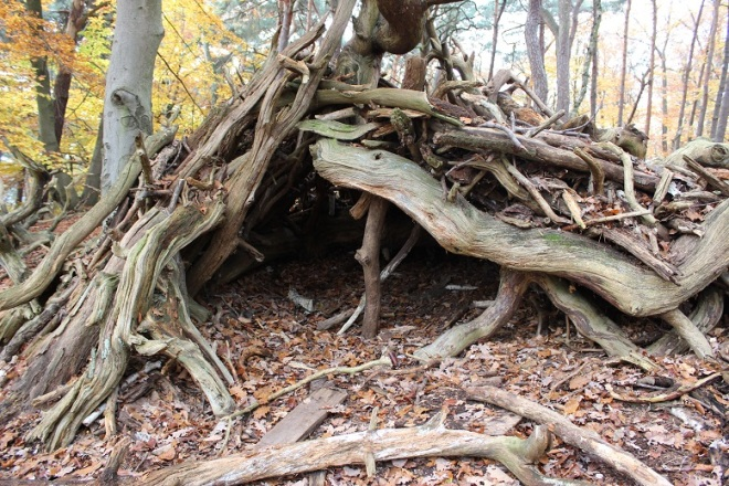 Wald (8)