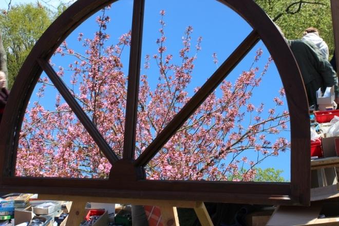 Hier gab es natürlich auch Kirschblüten ;o)