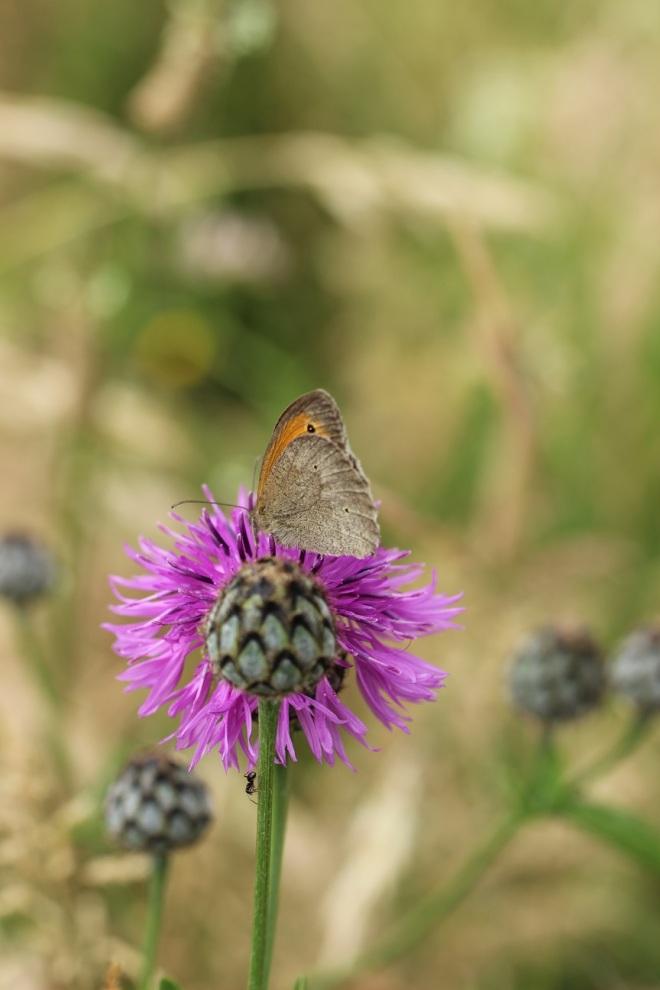 romikamasulzke-Blumen (10)