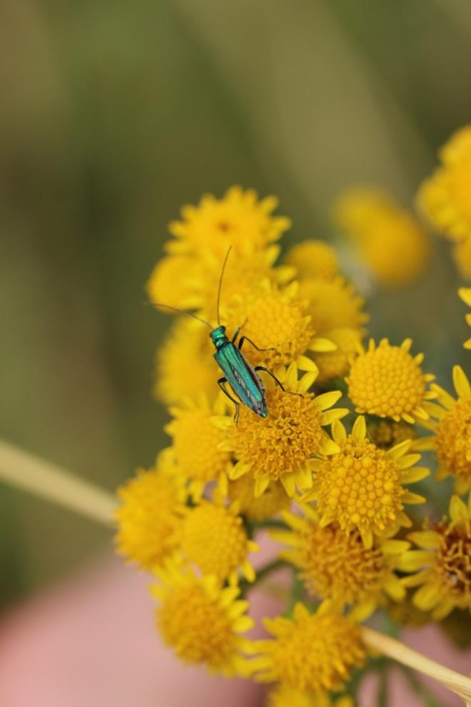romikamasulzke-Blumen (4)
