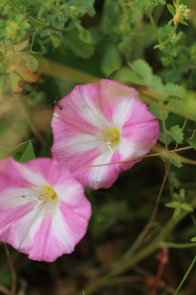 romikamasulzke-Blumen (8)